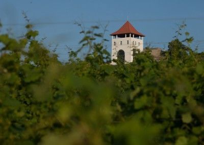 villa-vinea winery tour yourguideintransylvania.com