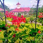 Valea Teilor Monastery 2