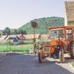 Hoghilag Tuberose local yard